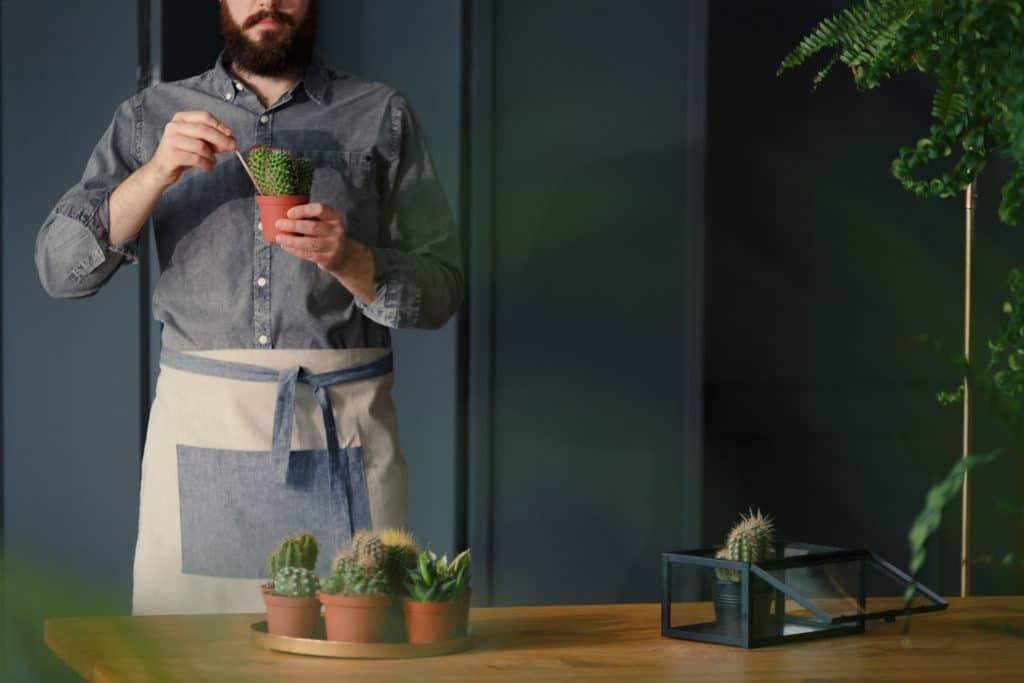 Man with gardening hobby replanting cacti in grey interior